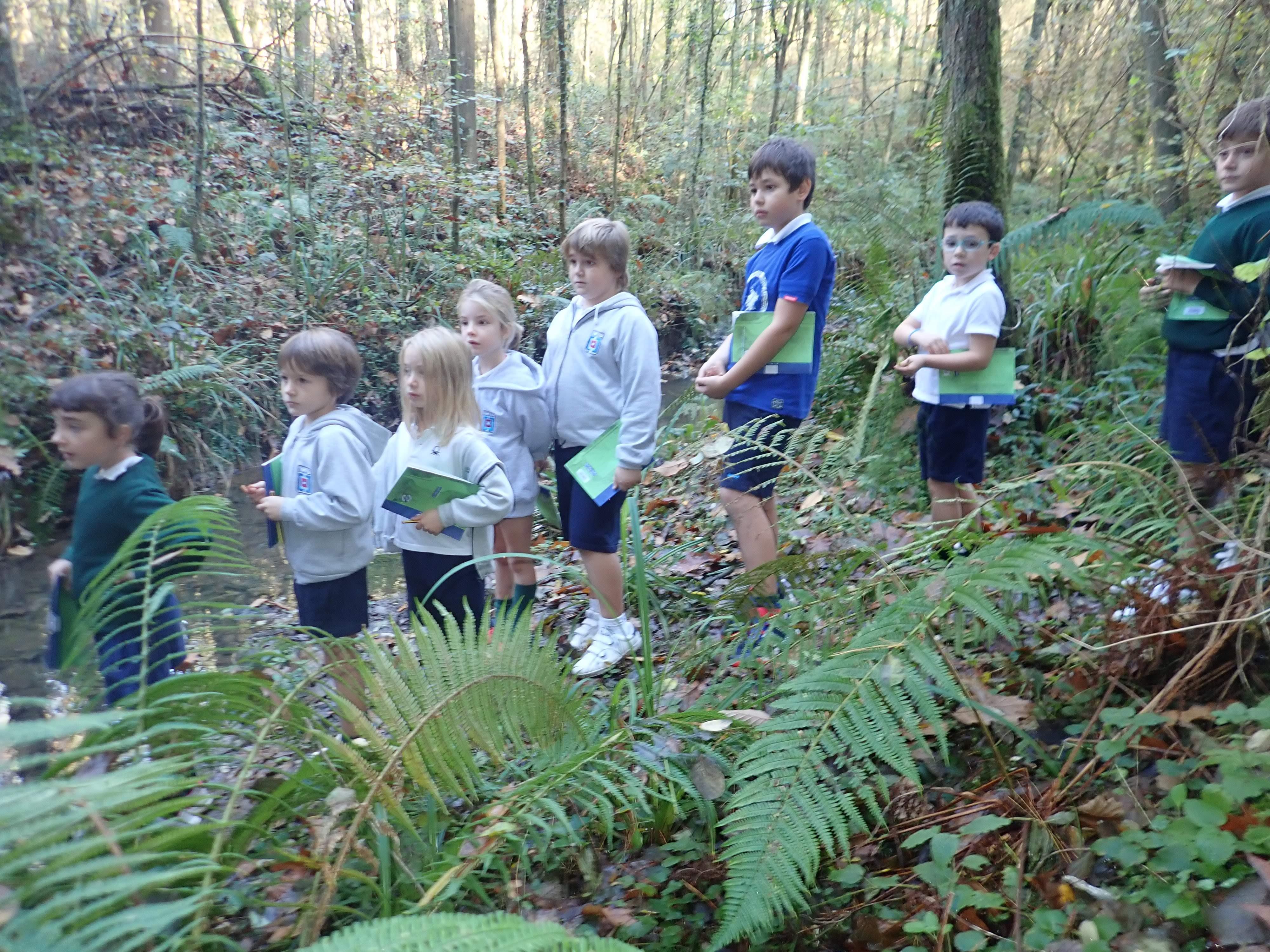 Sortie en forêt CE1C et CM2B